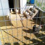 πτηνοτροφείο